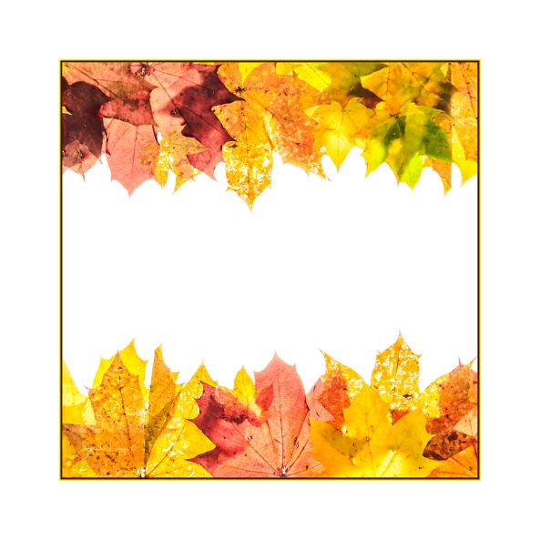 Autumn Pennants