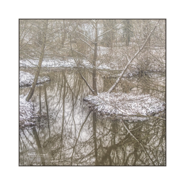 Wintry Reflections