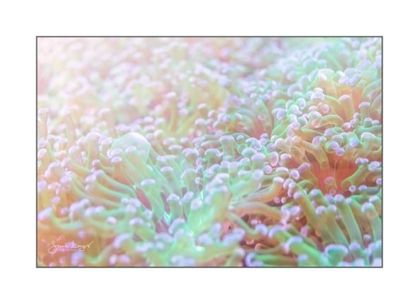 Photosynthesis Beneath The Sea