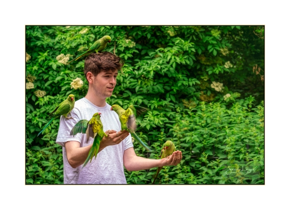 Cian with parakeets in Hyde Park