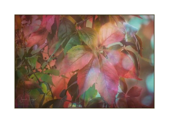 Autumn Aglow