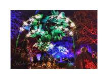 Wisley Glows 2018