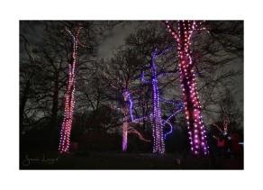 Christmas At Kew, Firework Trees