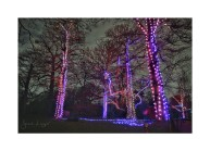 Christmas At Kew, Firework Trees