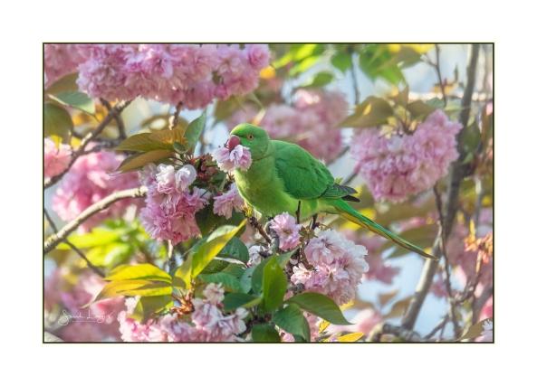 Blending Into The Blossom