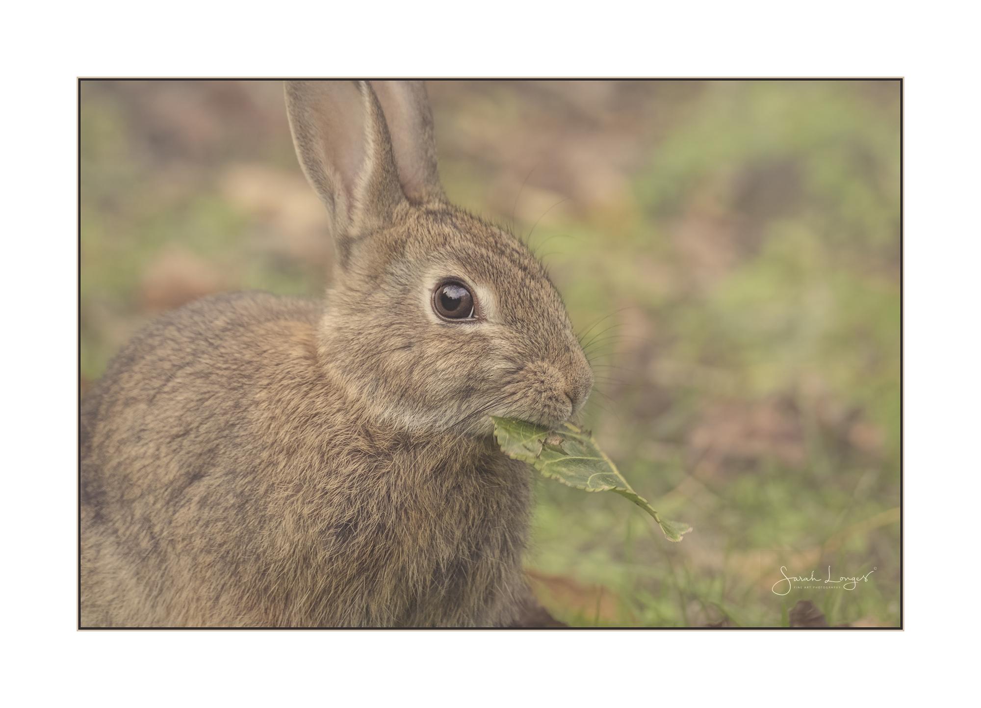 Bushy Park Bunny