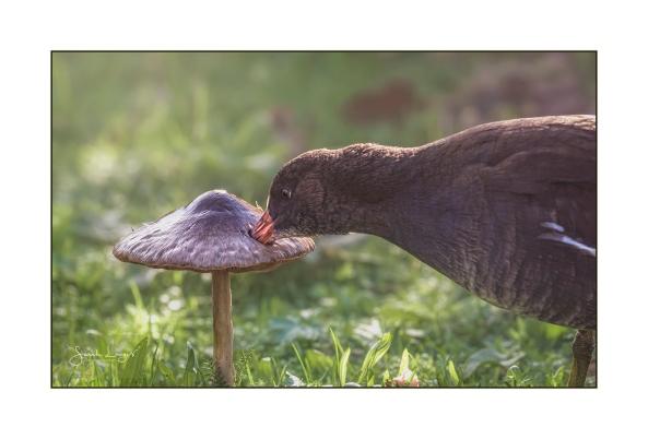Fungi Feast