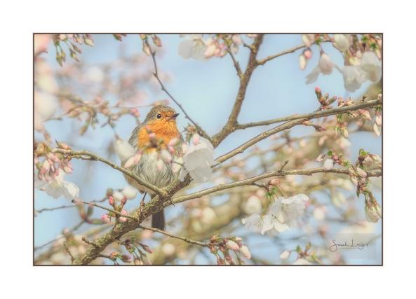 Bobbin In Blossom